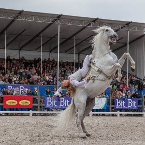 Horse-Event-2